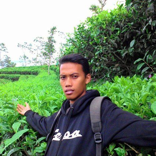 Ada Kebun Teh di Desa Nglinggo Kulon Progo